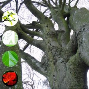 Baumforum BaumWert
